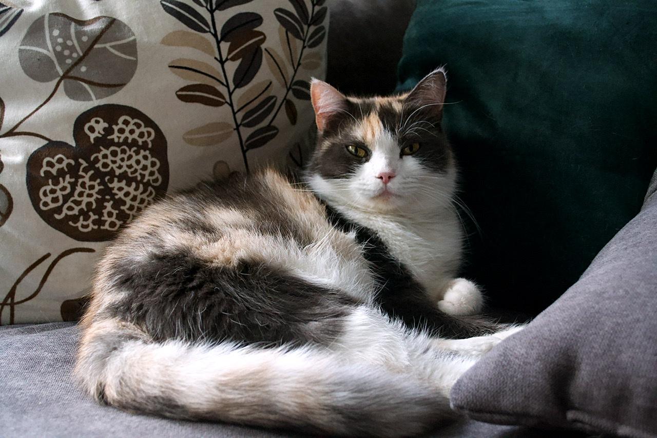 Vermisst: Katze Lotta aus 68309 MA-Käfertal