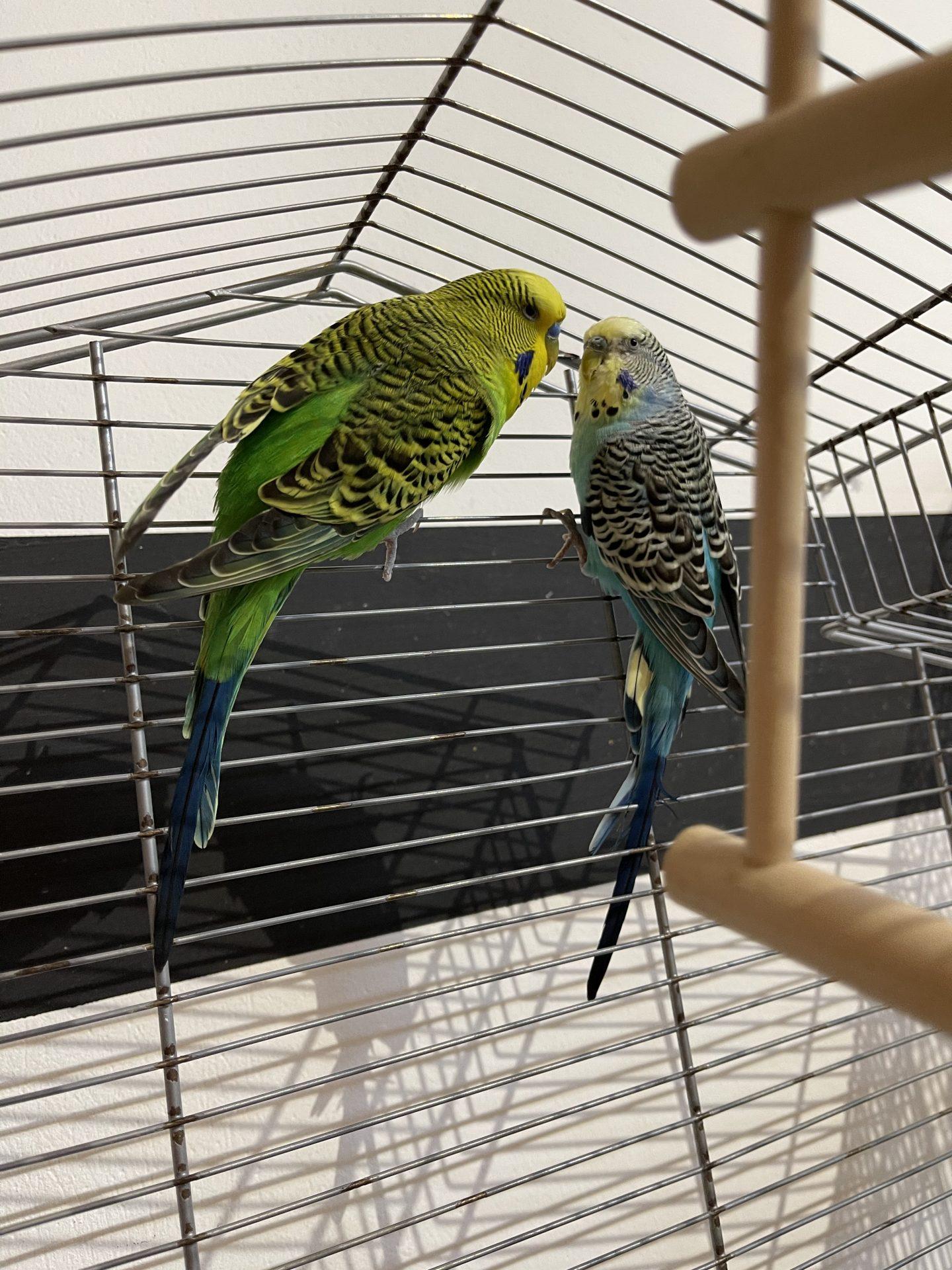 Pepe & Hugo