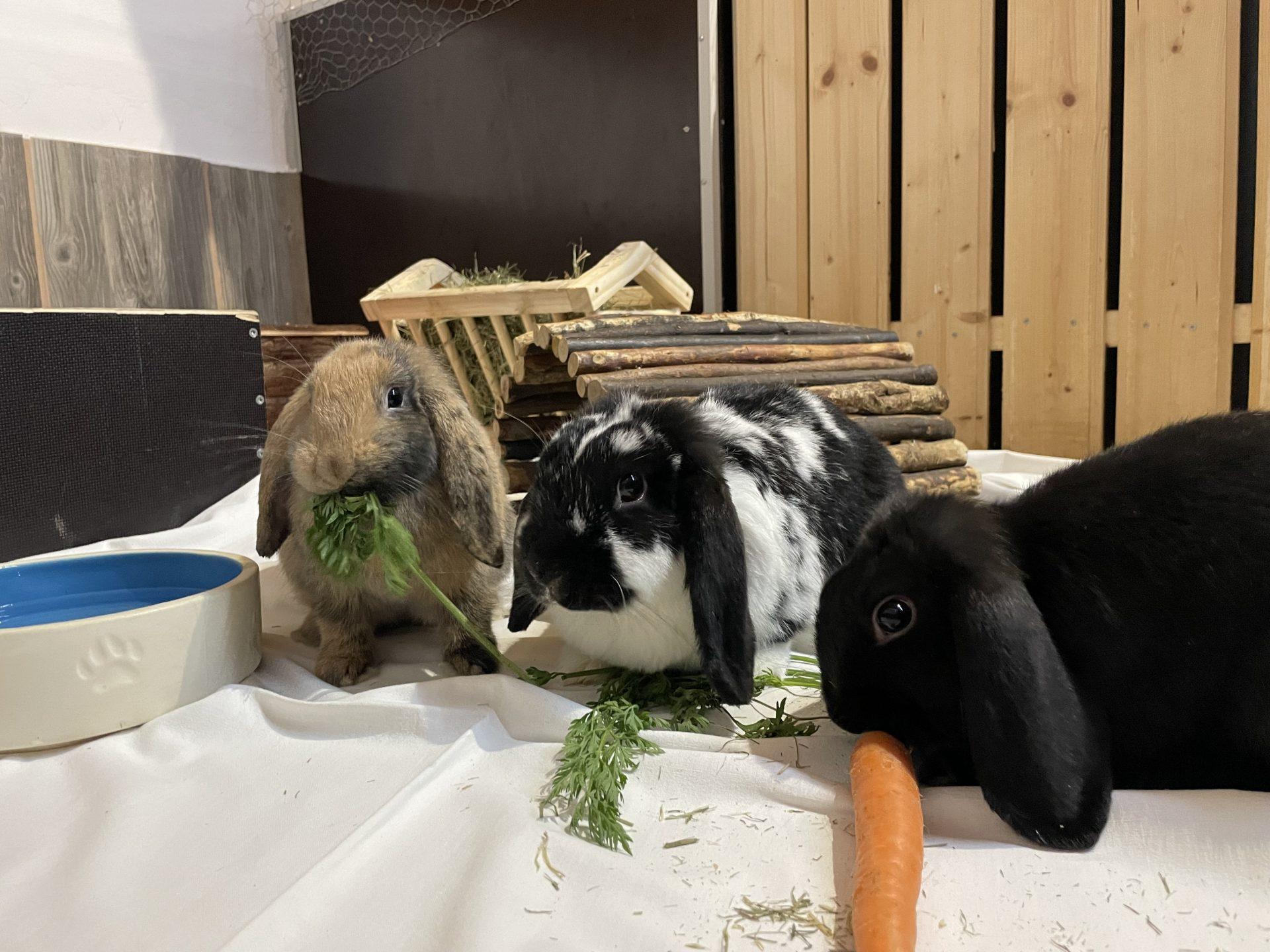 Schnuffi, Luna und Lilly