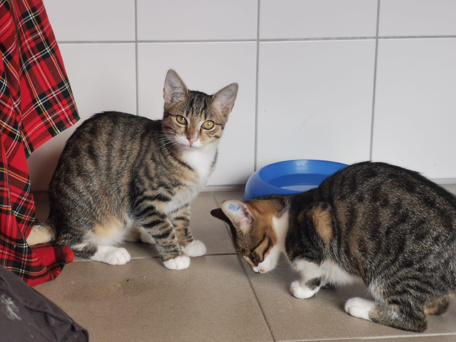 Amari & Imani & Tzain